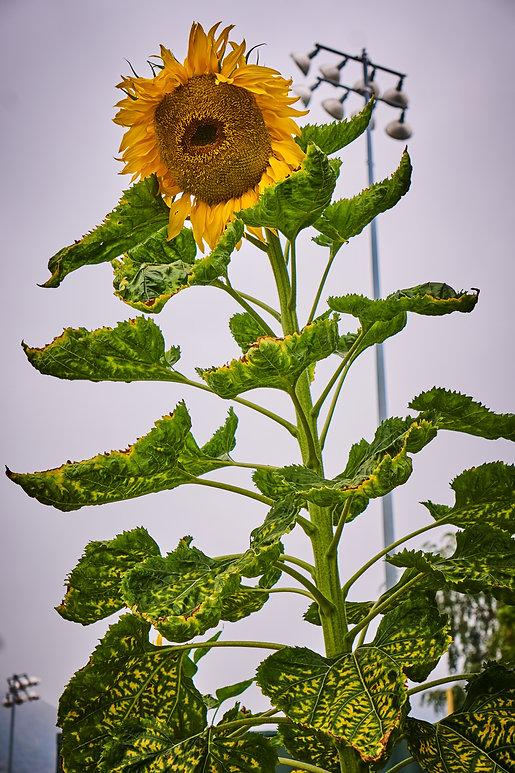 Garden Harvest.jpg