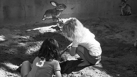 sand box bunnies.jpg