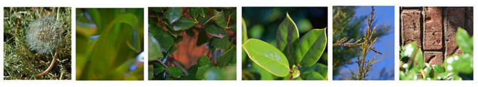 Growth-Hope-Hohnke-Cropped-2.jpg