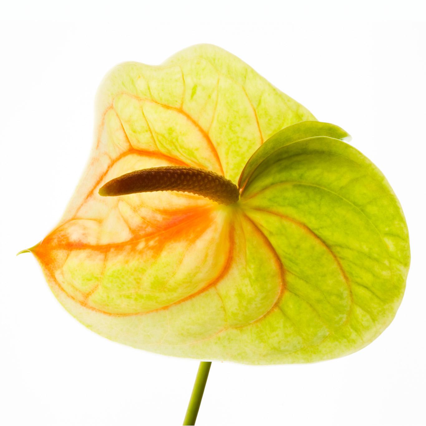 Mod Flora Book