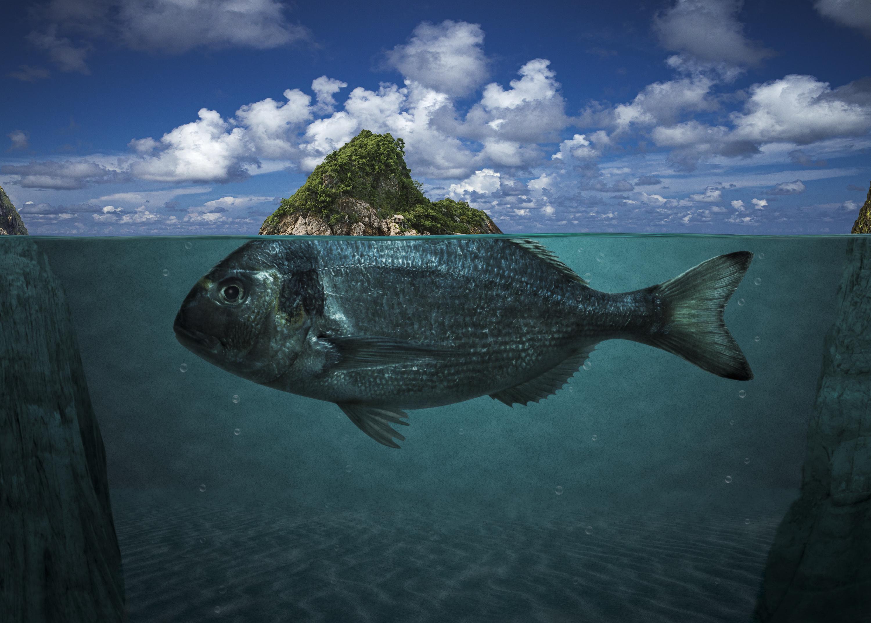 Fish Fin Island