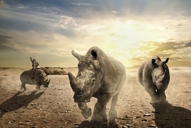 Rhino Round-Up