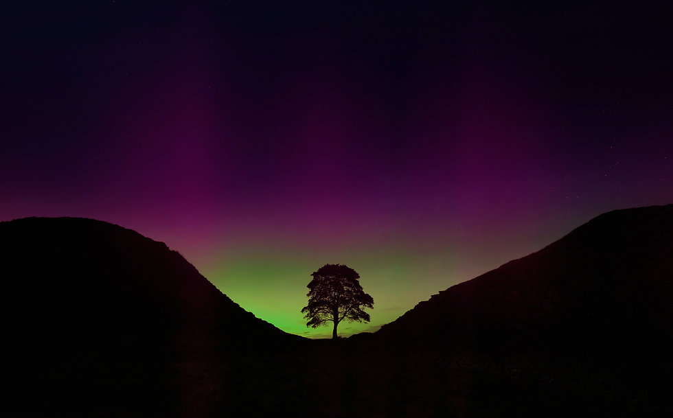 Sycamore Gap tree at night silhouetted b