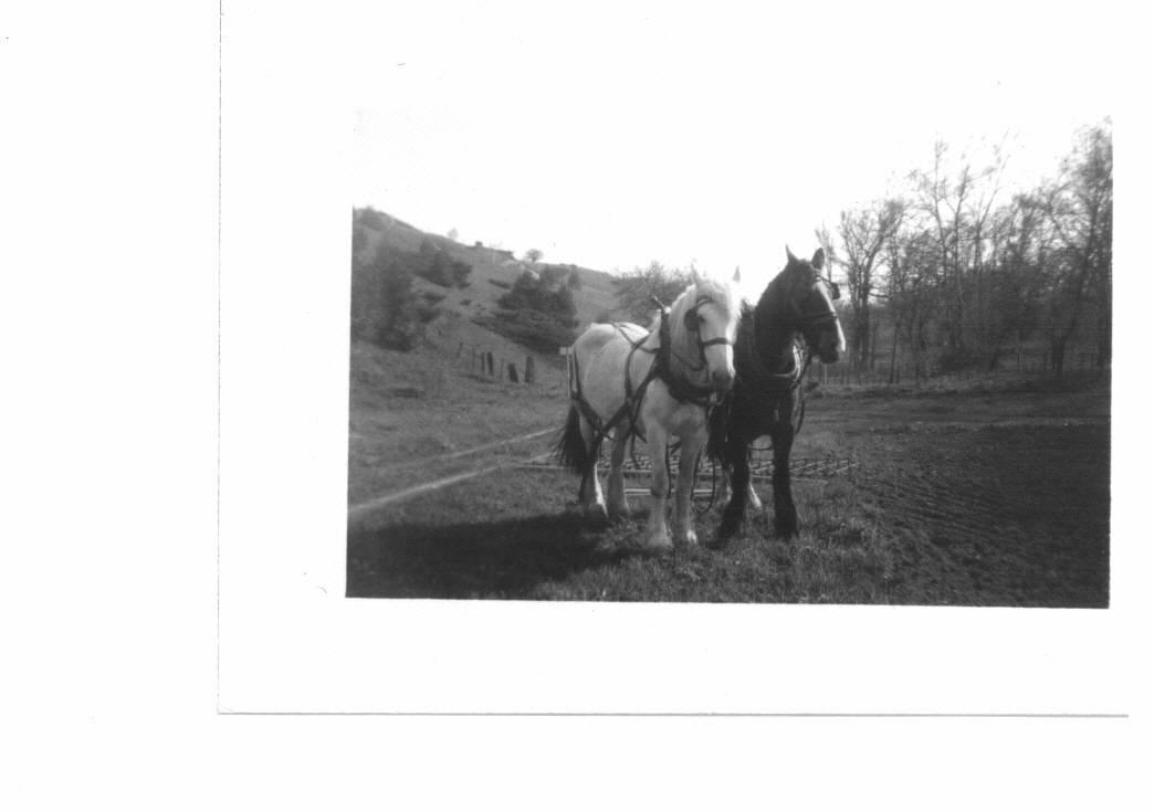 horses tilling victory garden behind Clark Huffs.jpg