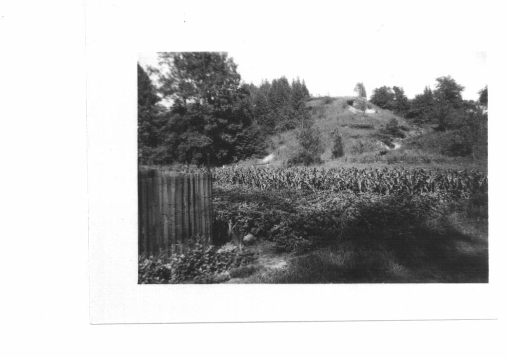 The hill behind 50-52 Victory Garden, corn potatoes, beets and beans, 1943 quest