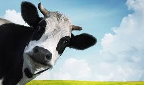 Significado de Mão de Vaca