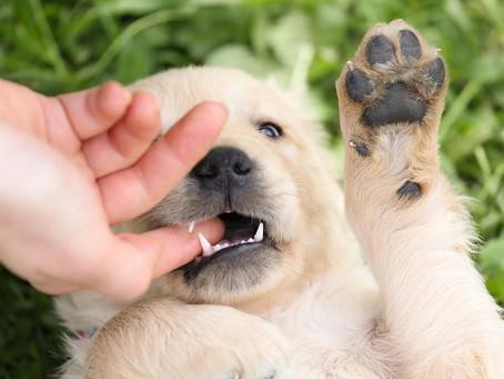 MENTIRAS DA INTERNET: Um cachorro viajou 100 km para morder seu ex-dono que o abandonou?