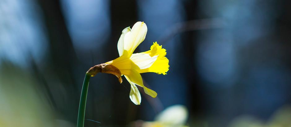 A Prayer for Lenten Grace