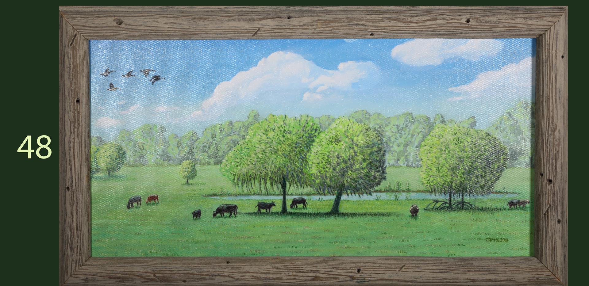 Cows on Vaughn Road
