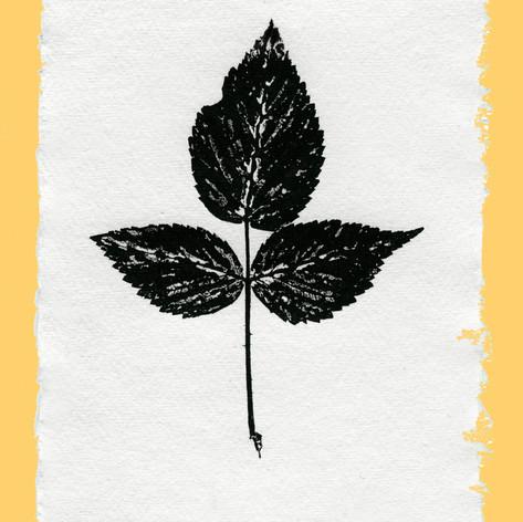 plant print 4125 copy.jpg