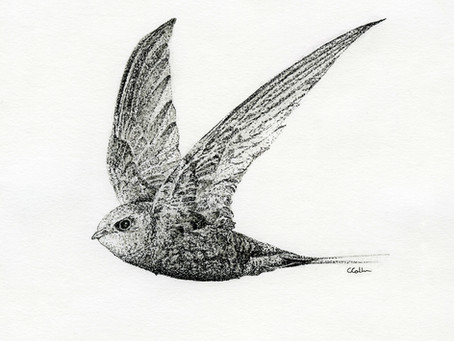 A Sketchbook Blog