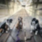 Urban pups being fancy :).jpg