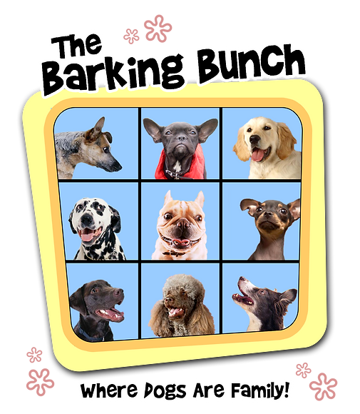 The Barking Bunch Los Angeles Dog Training Dog Hiking Dog Walking