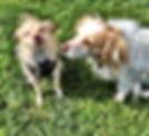 Toluca Lake Dog Day Care Burbank Dog Day Care North Hollywood Dog Day Care Toluca Lake Positive Reinforcement Dog Trainer Burbank Positive Reinforcement Dog Trainer North Hollywood Positive Reinforcement Dog Trainer