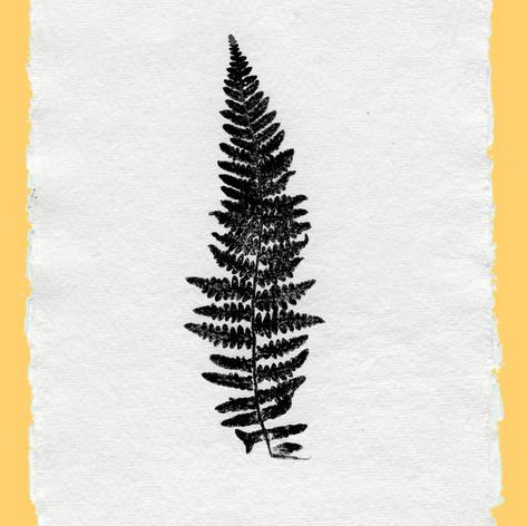 plant print 2123 copy.jpg