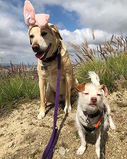 #bunnies.jpg