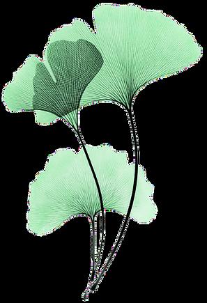 ginkgo-leaf-painting-27_modifié.png