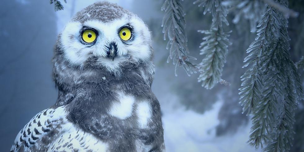 Envie de développer votre intuition ? (Atelier sur 2 jours)  7 et 8 décembre
