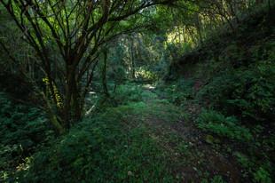 La densidad del Bosque en Señorío Agua Zarca
