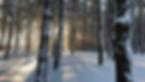 videoblocks-winter-forest-landscape-and-