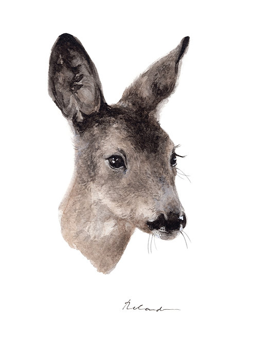 Roe deer fawn - giclee print