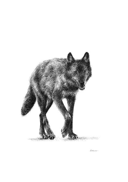 Wolf - ORIGINAL