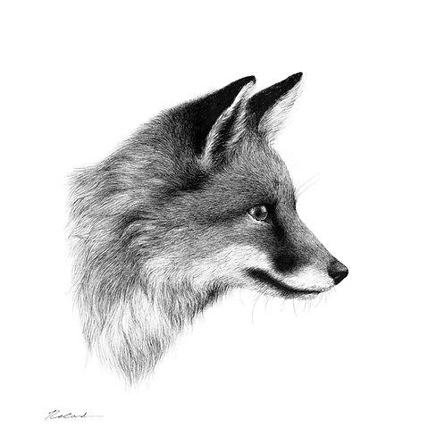 Fox portrait |  original ink illustration