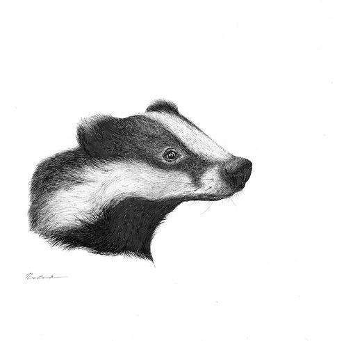 Badger portrait     original ink illustration