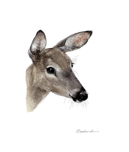 Deer 1 - giclee print