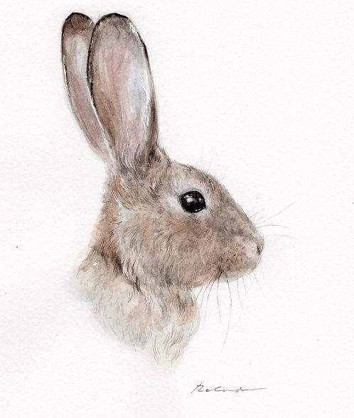 Bunny  •  original watercolor