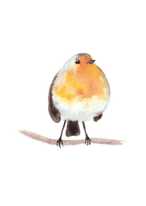 Robin - Postcard