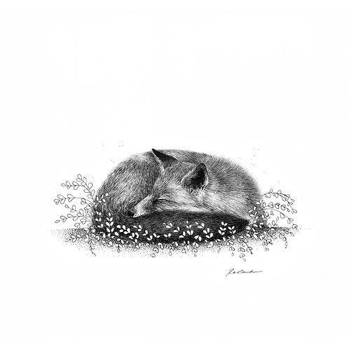 Sleepy Fox - PRINT