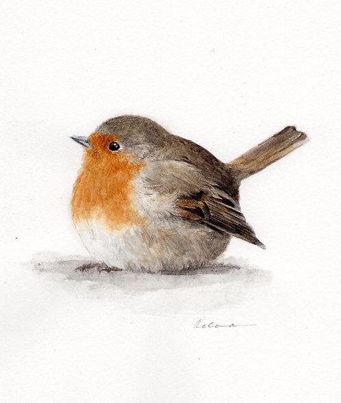 Robin | original watercolor