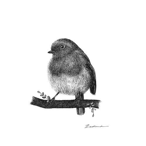 Robin  |  original ink illustration
