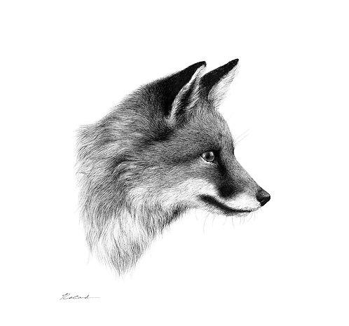 Fox Portrait - PRINT