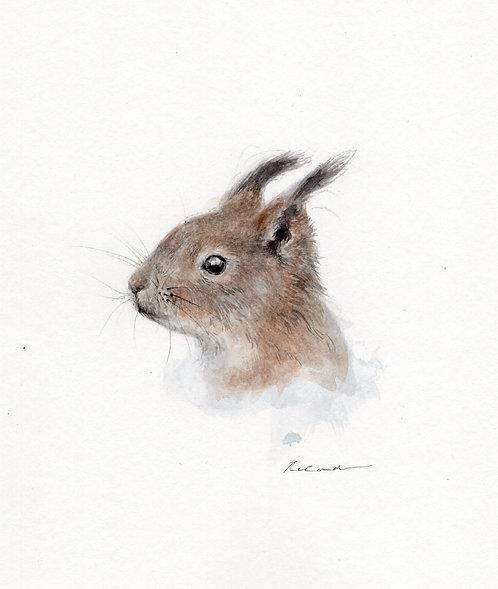 Squirrel  •  original watercolor