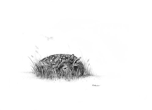 Hiding - Print
