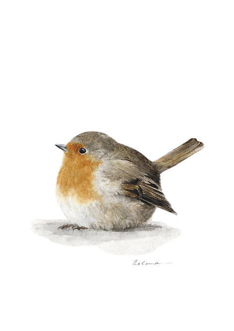 Robin   giclee print