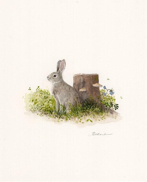 Bunny in the meadow     original watercolor
