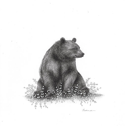 Sitting bear     original ink illustration