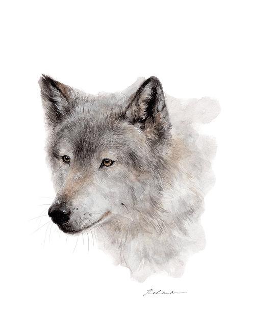 Wolf  |  original watercolor