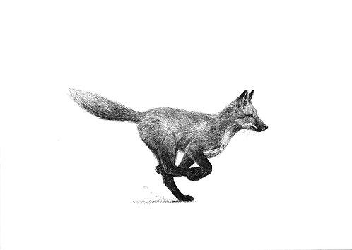 Sprint  |  original ink illustration