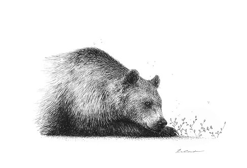Dreaming bear    original ink illustration