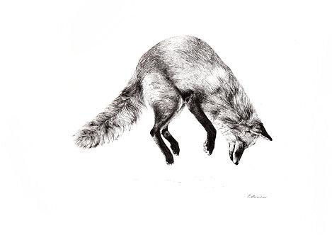 Leaping fox- Print
