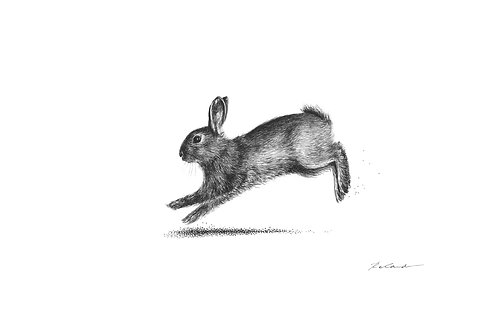Running bunny |  original ink illustration