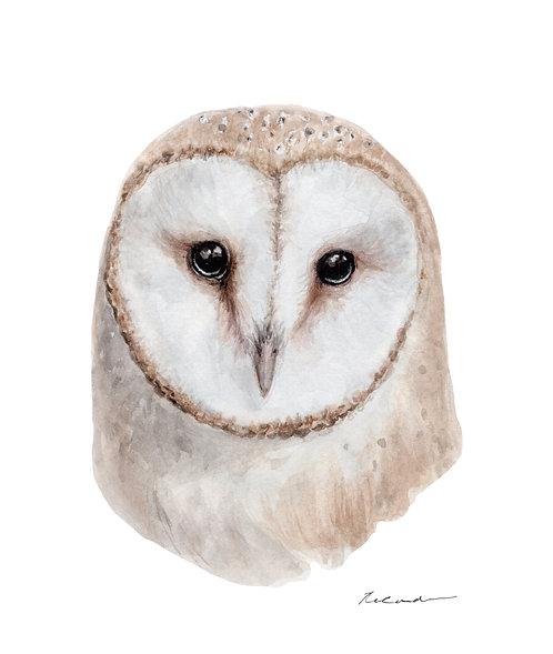 Barn owl • original watercolor