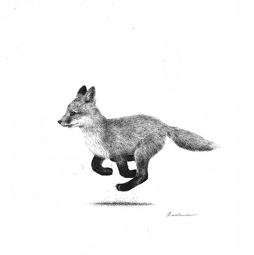 Zoomie |  original ink illustration