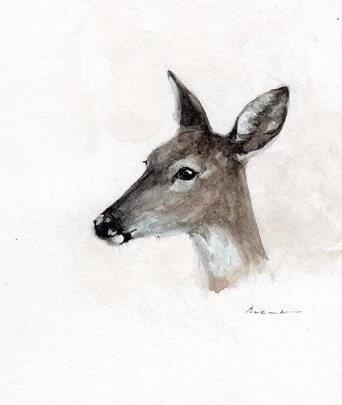Deer portrait  | original watercolor