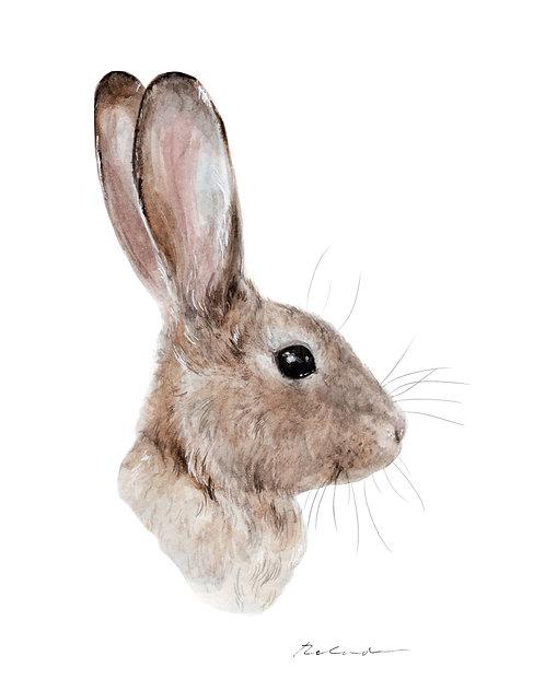 Bunny - giclee print