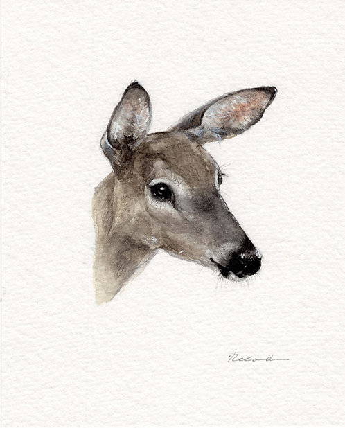 White tailed deer | original watercolor